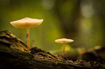 Herfst in Bosland von Human- pictures
