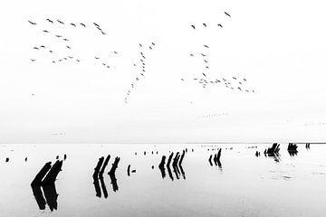 Ganzen vliegend over de Waddenzee van Anja Brouwer Fotografie
