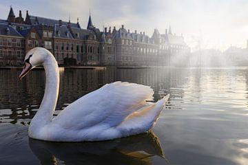 cygne blanc sur le Hofvijver à La Haye sur gaps photography
