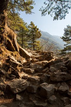 Stenen op het pad. Stap voor stap lopen we voort. van Ton Tolboom
