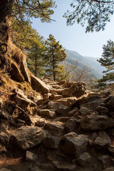 Stenen op het pad. Stap voor stap lopen we voort.