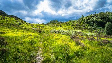 Glooiende heuvel in Glenfinnan von Floris van Woudenberg