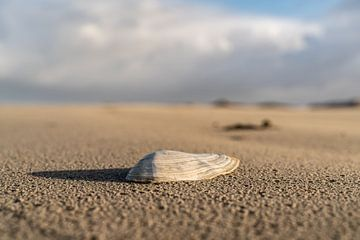 Schelp op het strand in de winter zon van henry hummel