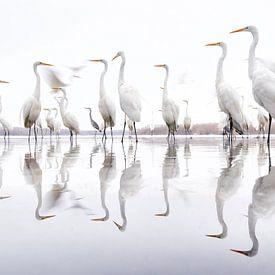 Grote Zilverreigers staand langs de rand van een meer van AGAMI Photo Agency