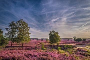 Bloeiende heide van Niels Barto