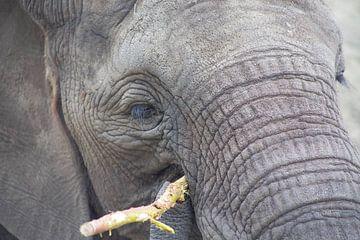 olifant van marijke servaes