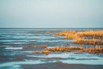 Waddenzee in DIthmarschen van Florian Kunde