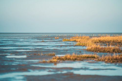 Wattenmeer in Dithmarschen