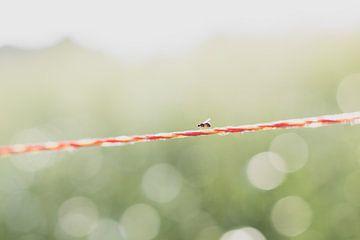 Fliegen am Draht von Yvette Smink