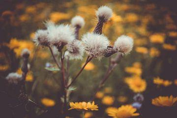 Zaden en bloemen van Mi Vidas Fotografie