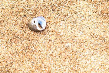 Une tête d'oiseau en nacre dans le sable sur rene marcel originals