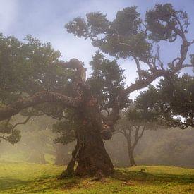 Laurel tree in the fog van Thomas Herzog