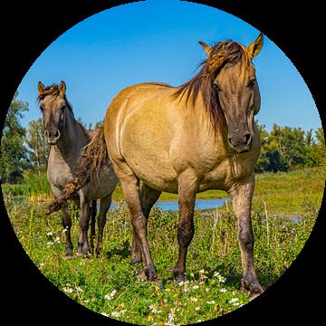 Paarden bij Slot Loevestein, Nederland van Jessica Lokker