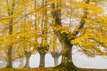 Nach dem Sommer kommt der Herbst von Lars van de Goor