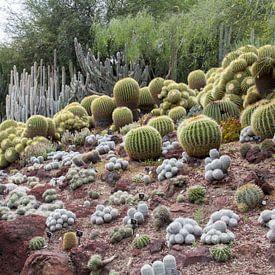 Cactussen in de woestijntuin van Huntington Gardens van Henk Alblas