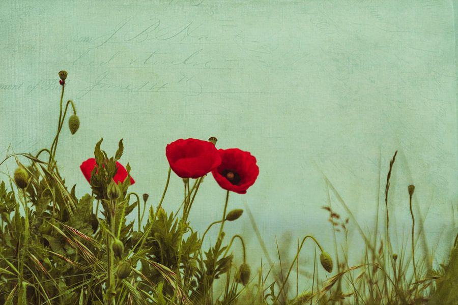 Red Poppies van Dirk Wüstenhagen