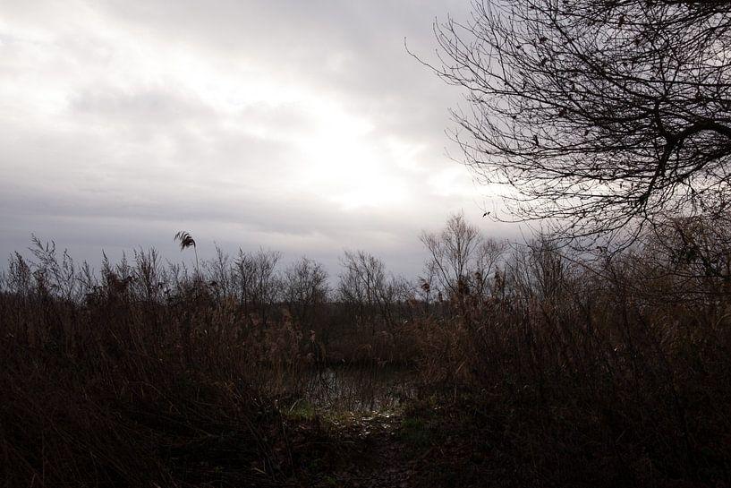 Ein Sonnenstrahl bringt Licht in die Winterdunkelheit von Gwen Laremans