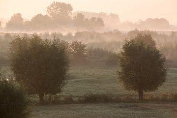 Uiterwaarden met mist