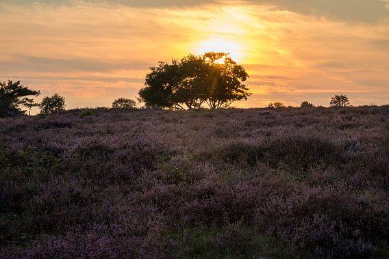 Hoorneboegse Heide - 4