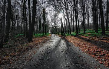 Mystischer Wald von Arash Mahdawi Nader