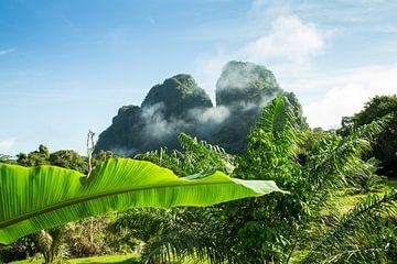 Wakker worden in Khao Sok National park van Martijn Bravenboer