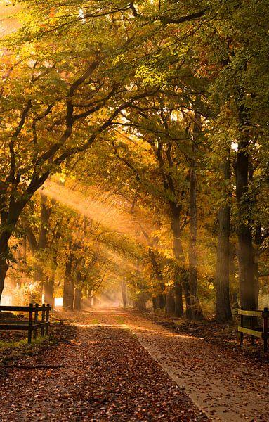 Let there be light van Jeroen Mondria