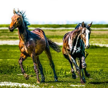 Paarden sur Harrie Muis