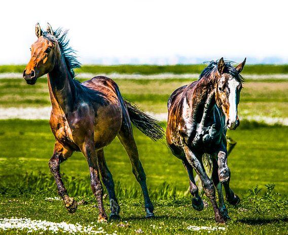 Paarden van Harrie Muis