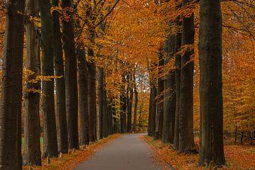 Herbst auf der Veluwe von Annie Keizer