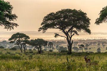 Afrikanische Landschaft von Frans Bouman