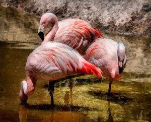 Flamingo's aan de waterkant