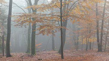 Beuk in herfstbos van Dick Doorduin