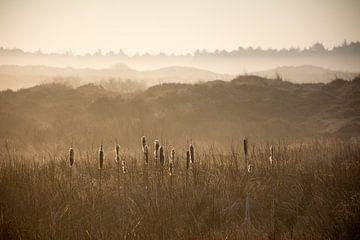 Duinlandschap van Mark Scholten