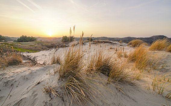 De duinen