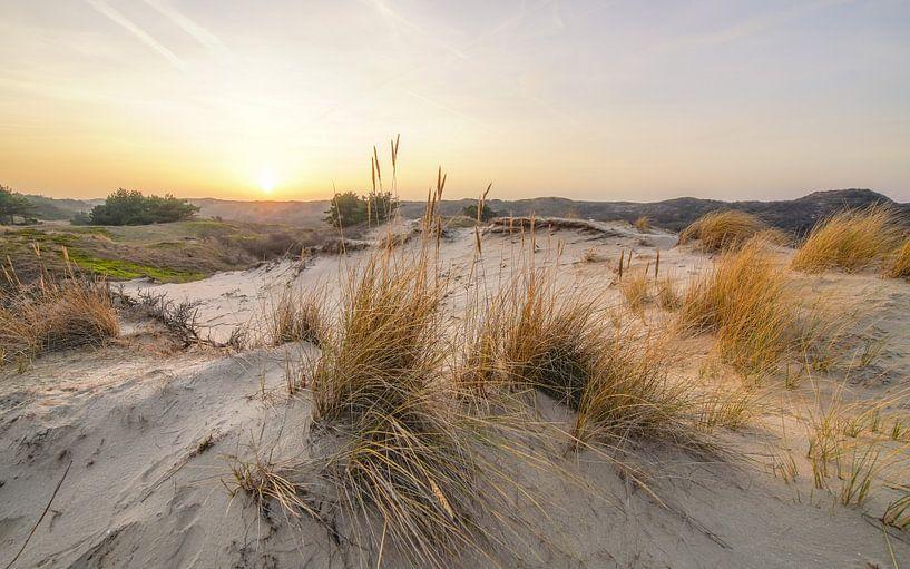 De duinen van Dirk van Egmond