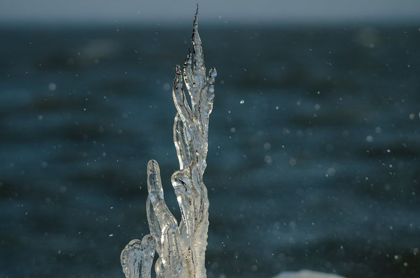 Bevroren tak met opspattend IJsselmeerwater van Erik van Riessen
