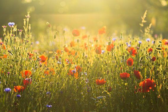 Summer vibes van Ronald Kamphuis
