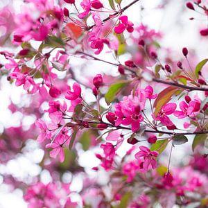 Bloesem in roze 2 van Wen van  Gampelaere