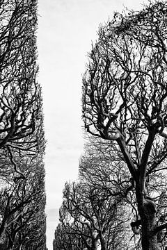 Jardin des plantes. Parijs sur marjolein Parijs