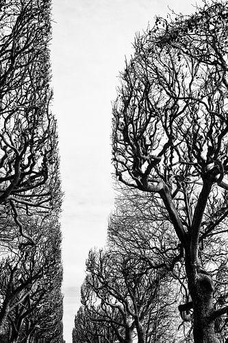 Jardin des plantes. Parijs van