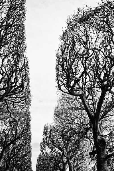 Jardin des plantes. Parijs