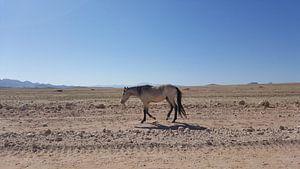Wilder Mustang in Namibia