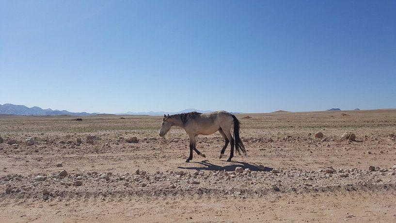 Wilder Mustang in Namibia von Celine Seelemann