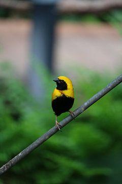 zwart en geel von Rianne de Heij