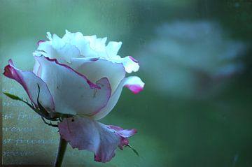 rozen verwelken schepen vergaan  bloem van Groothuizen Foto Art
