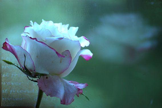 rozen verwelken schepen vergaan  bloem