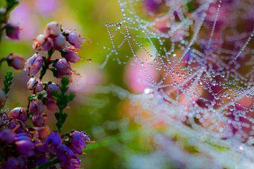 Spinnenweb met dauw op bloeiende heideplant van
