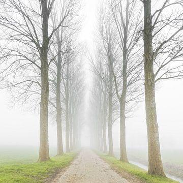 Omzoomd landweggetje in de mist van Jenco van Zalk