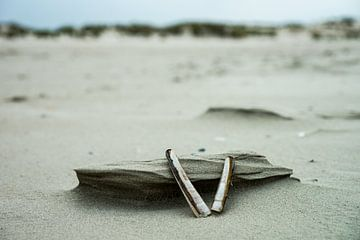 Schelpen op het strand van Jan Peter Mulder