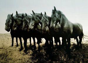 Paarden, Chevaux, Horses, Pferde-
